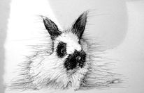 Tiere, Flauschig, Kaninchen, Zeichnungen