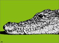 Illustration, Krokodil, Illustrationen,