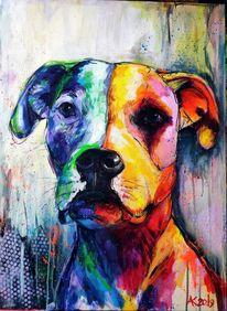 Rot, Gelb, Bulldogge, Portrait