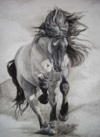 Noriker, Pferde, Reiten, Kaltblut