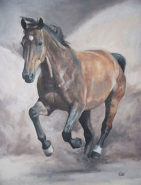 Pferde, Braun, Haustier, Stern