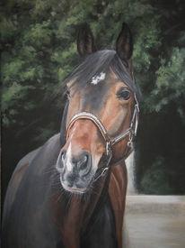 Pferde, Haustier, Tiere, Braun