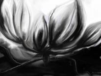 Blüte, Magnolien, Schwarz weiß, Digitale kunst