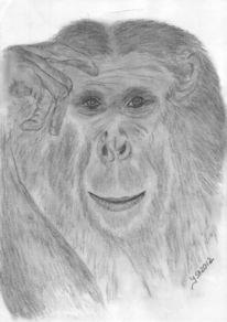 Tiere, Affe, Portrait, Tierzeichnung
