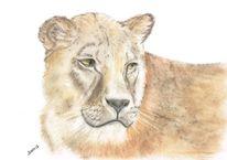 Tiere, Augen, Tierportrait, Löwe