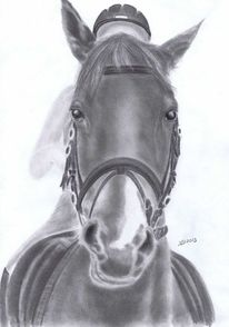 Pferde, Portraitzeichnung, Grafit, Tierportrait