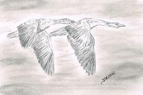 In bewegung, Tierzeichnung, Vogel, Szene