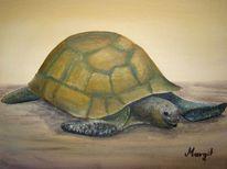 Schildkröte, Malerei
