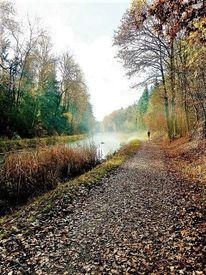 Baum, Herbst, Landschaft, Ludwigskanal