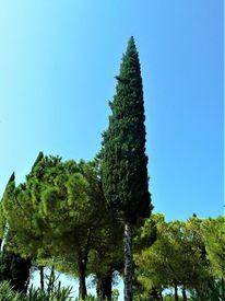 Baum, Zypressen, Landschaft, Italien
