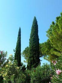 Landschaft, Gardasee, Baum, Sommer