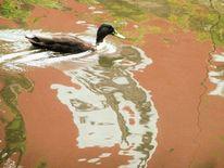 Wasser, Spiegelung, Valznerweiher, Enten