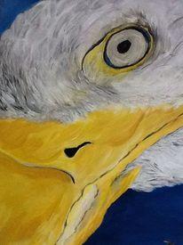 Vogel, Adler, Tiere, Adlerkopf