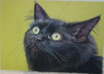 Katze, Pastellmalerei