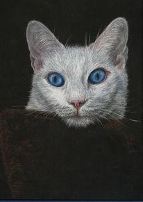 Katze,