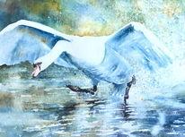 Start, Wasser, Schwan, Aquarellmalerei