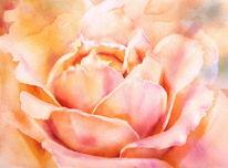 Rose, Aprikose, Rosenknospe, Aquarellmalerei