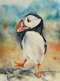 Papageitaucher, Island, Aquarellmalerei, Vogel