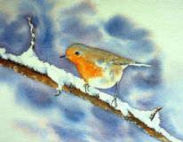 Rotkehlchen, Vogel, Aquarellmalerei, Winter