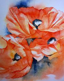 Mohnblumen, Rot, Mohngesicht, Aquarellmalerei