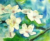Pflaume, Aquarellmalerei, Blüte, Frühling