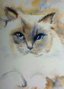Aquarellmalerei, Katze, Schnurrhaare, Puppe