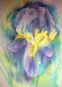 Gelb, Aquarellmalerei, Iris, Schwertlilie