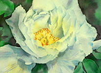 White poppy, Weißer mohn, Aquarellmalerei, Mohnblüten