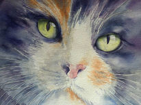 Katze, Aquarellmalerei, Schnurrhaare, Kater
