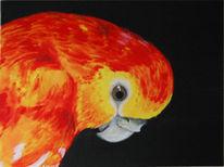 Vogel, Tiere, Gemälde, Farben