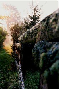 Moor, Landschaft, Fotografie, Natur