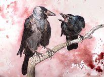 Dohle, Vogel, Tusche, Aquarellmalerei