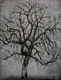 Kastanien, Baum, Winter, Zeichnungen