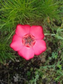 Blumen, Rot, Blüte, Fotografie