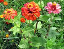 Pflanzen, Natur, Blumen, Fotografie