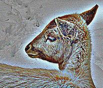 Natur, Reh, Tiere, Digitale kunst