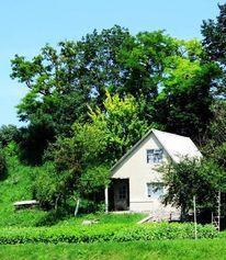 Baum, Haus, Wald, Fotografie