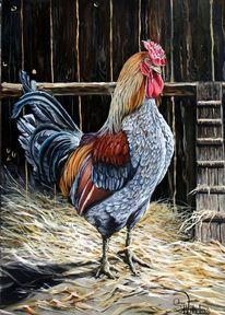 Feder, Barnevelder rooster, Hühnerleiter, Huhn