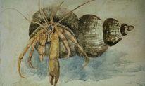 Natur, Aquarellmalerei, Grobe spachtelmasse, Einsiedlerkrebs