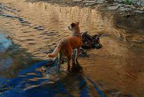 Landschaft, Fotografie, Tiere, Wasser