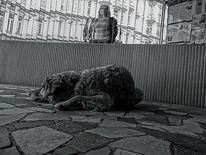 Tiere, Gesellschaft, Fotografie, Politik
