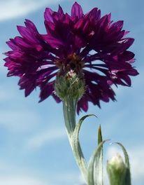 Himmel, Fotografie, Blumen, Pflanzen