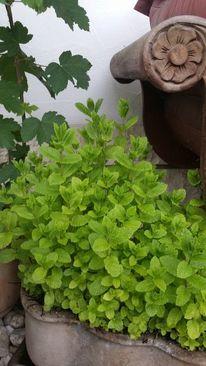 Grün, Pflanzen, Blumen, Fotografie