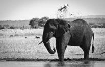 Wasser, Waschen, Elefant, Afrika