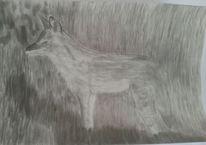 Wildtiere, Tiere, Kohlezeichnung, Fuchs