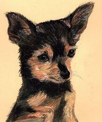 Hundezeichnung, Tierportrait, Zeichnung, Pferdezeichnung