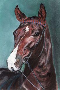 Tierportrait, Zeichnung, Pferdezeichnung, Donnerhall