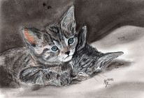 Katze, Katzenportrait, Portrait, Tierportrait