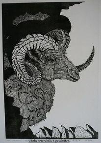 Schlei, Tiere, Steinbock, Seele
