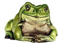 Tiere, Frosch, Malerei
